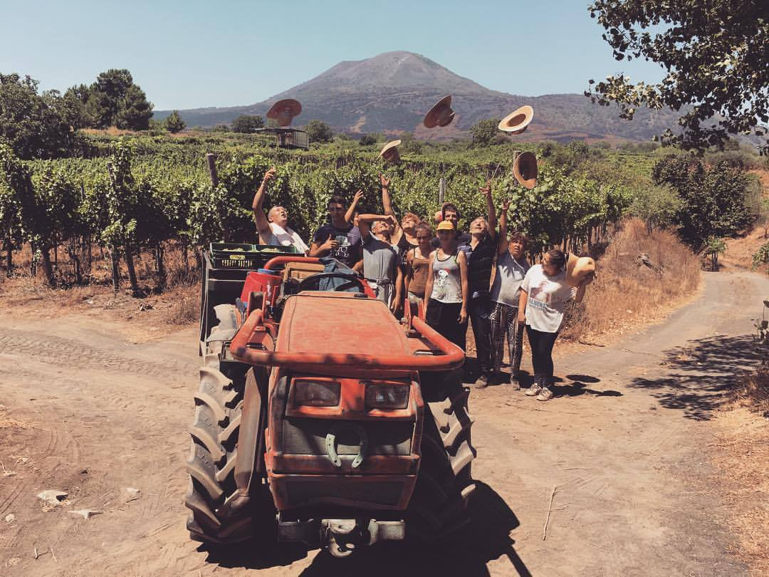 Sorrentino Vesuvio winemakers at work in vineyard in Italy
