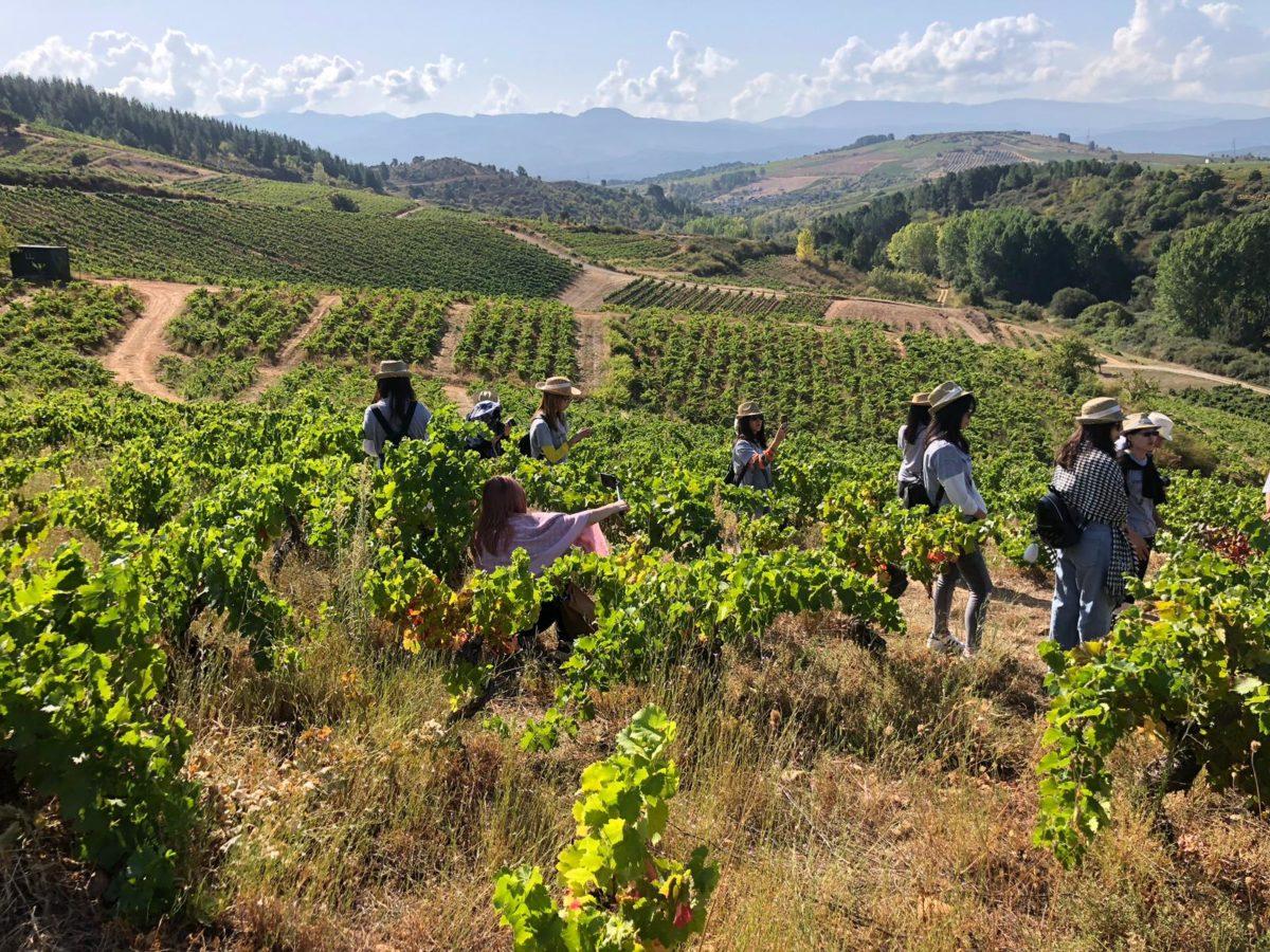 Bodegas Estefania - vineyards