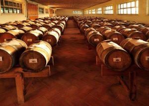 Roncolo 1888 Venturini Baldini winery cellar full of wooden barrels