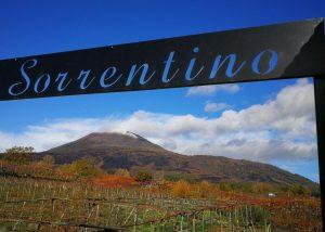 Sorrentino Vesuvio vineyard overview in Italy