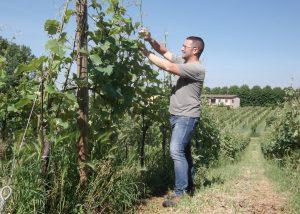 winemaker working on the vineyard in the amazing italian winery peri bigogno.