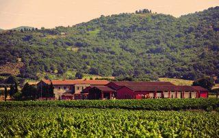 Tenuta Fertuna vineyard and buildings in Italy