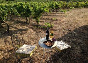 Alútiz Vinos (Bodegas Pascual Berganzo)_Wine tasting in the vineyard_2