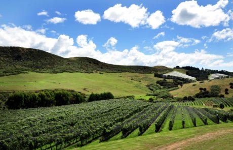 Auckland wine region