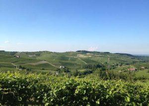 Azienda Agicola Rinaldi Vini_vineyard_Yes