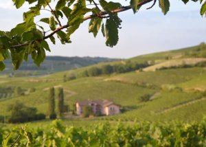 Azienda Agicola Rinaldi Vini_vineyard_3