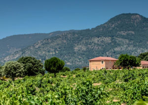 Bodegas Y Viñedos Valleyglesias - landscape vineyards