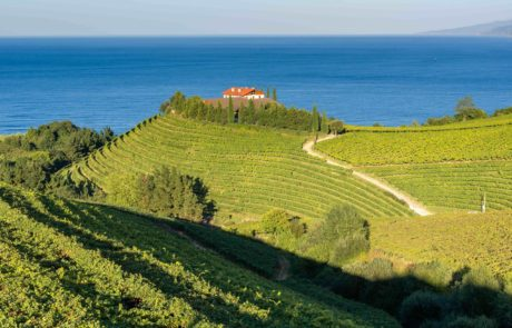 Basque Country wine region