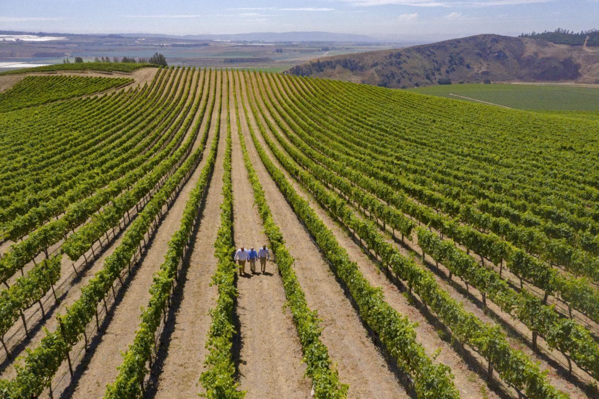 The view on the vineyard of the Bien Nacido & Salomon Hills Estate
