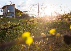 Bodegas y Viñedos Gancedo_vineyard and estate