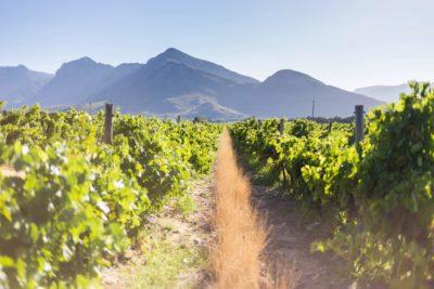 Breede River Valley wine region