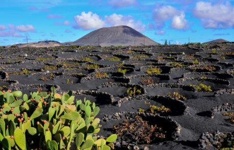 Canary Islands wine region