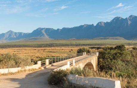 Cape South Coast wine region