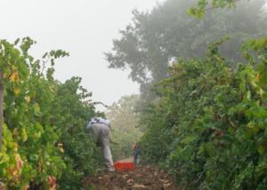Bodega Cerro San Cristobal - vineyards