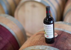 Bodega Cerro San Cristobal - wine bottle and barrels