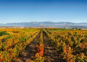 bodegas-corral-vineyards