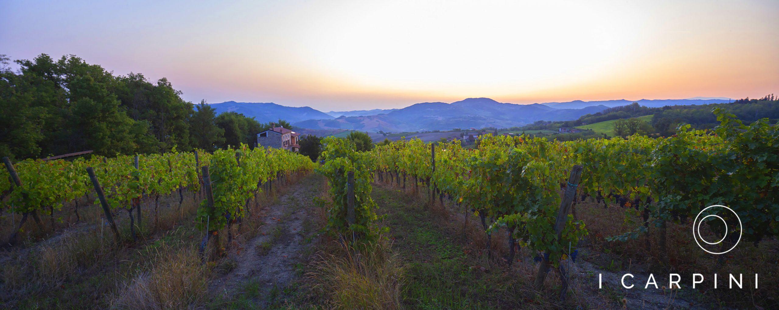 Cascina I Carpini_vineyard