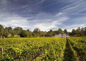 Corisca_bodega and vineyard_Yes