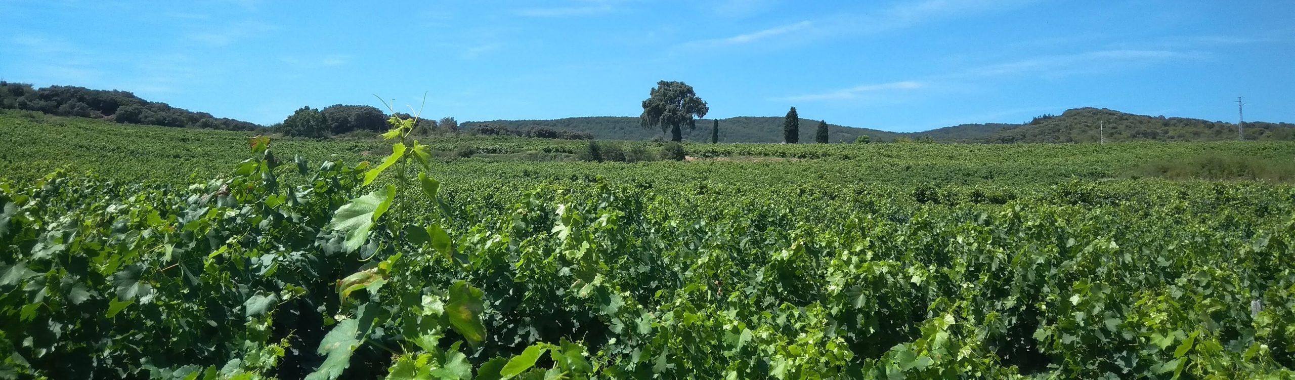 Bodega Y Vinedos Hija De Anibal Blue Sky Vineyards