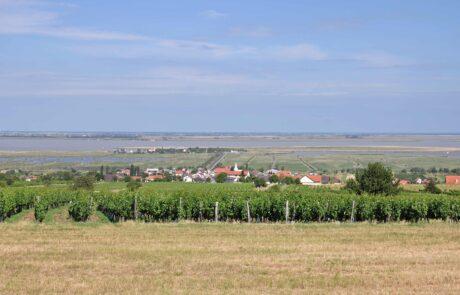 Burgenland wine region