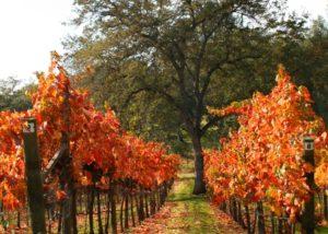 Westbrook Wine Farm vineyard