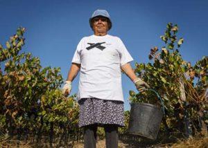 Fernão Pó Winery_woman working in the vineyard5_5
