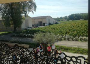 Château Kirwan - view on the vineyards