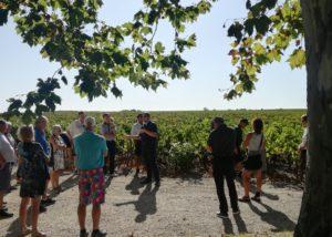 Château Kirwan - group tour in the vineyards