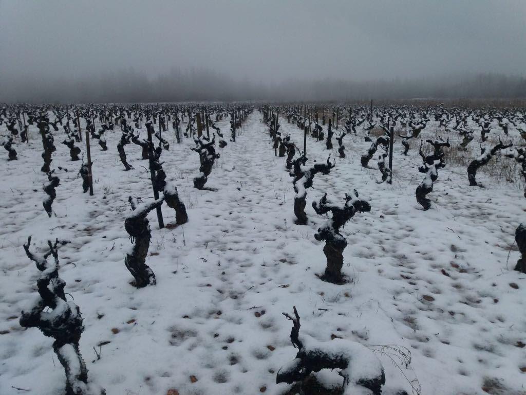 Bodega Y Vinedos Hija De Anibal - Snow