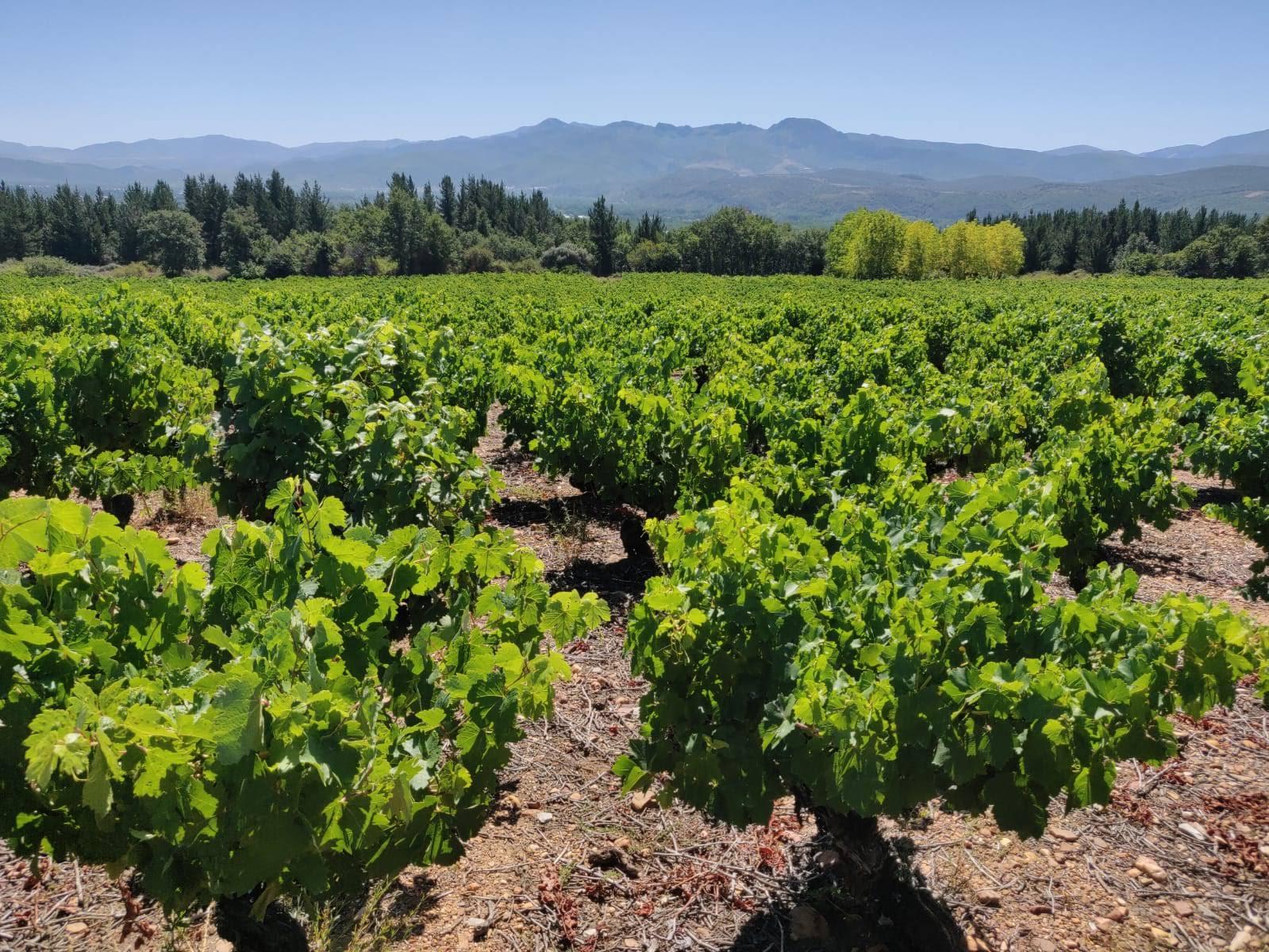 Bodega Y Vinedos Hija De Anibal - Vineyards