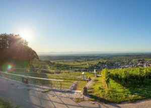 Vineyard Britzingen/Markgraeflerland