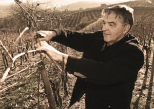 Istenič winemaker working on vineyard near winery in slovenia