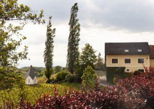 Muster Gamlitz - Winery