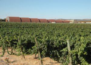 The winery and vineyard of Pago del Vicario