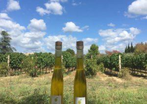 Domaine de la Senche - Garden vineyards with olive bottles