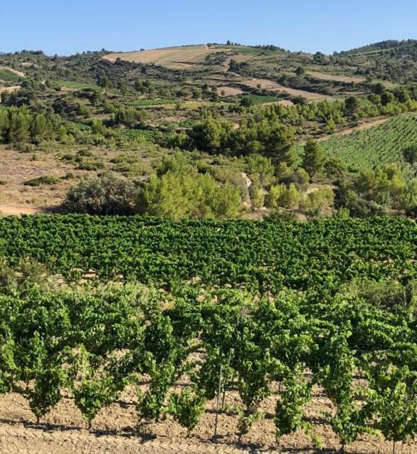 Domaine de la Senche - vineyards