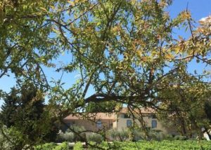 Domaine de la Senche - Vineyards in Front of house
