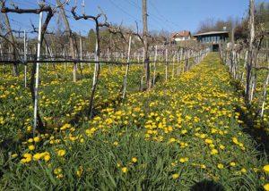 Plavinci Winery_winery_spring_7