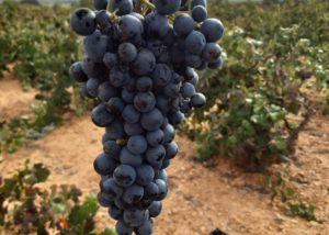 Bodegas Gratias. Familia Y Vinedos - bobal variety