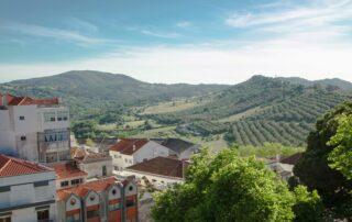 Vineyards on the hills of the Setubal Pininsula region
