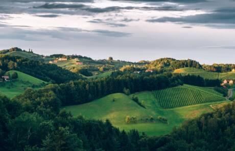 Styria wine region