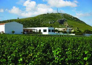 Triantafyllopoulos Winery_estate_3
