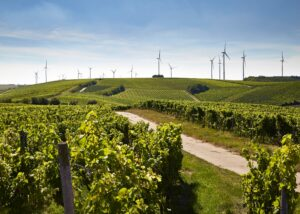 Weingut Hauck landscape vineyards