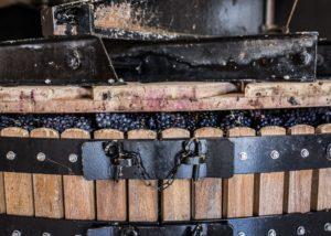 Dom Caudron - grape pressing