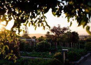 Longridge - garden and sunset