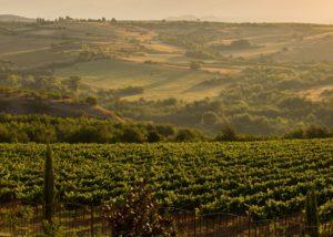 Rupel Winery - landscape vineyards