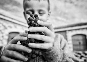 Baraka Winery - child & grape