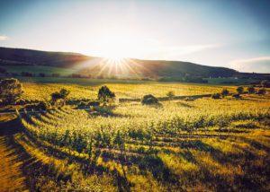 Vier Jahreszeiten Winzer - vineyards