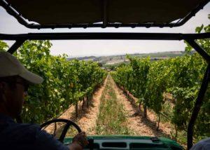 Longridge - driving in vines