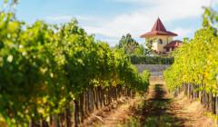 Rupel Winery - vineyard